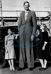 Robert Wadlow,  2.80 m tall,  Illinois USA. His name as actor is _Skycraper_