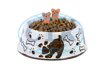 Isolated dish with dogfood and treats