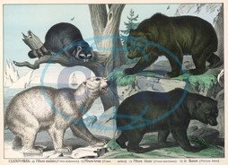 Various types of bear