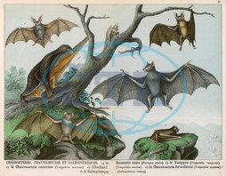 Six types of bat
