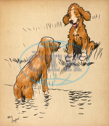 Puppy dogs emerging from swimming in river