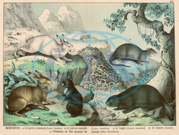 Various rodents,  hares,  rabbits,  etc