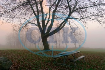 Absence, Autumn, Autumnal, Bare Tree, Bare Trees, Bench, Benches, Canada, Christie Lake Conservation Area, Color, Color Image, Colour, Colour Image, Day, Daytime, Empty, Ethereal, Fall, Fog, Foggy, Mist, Misty, Nobody, Onta
