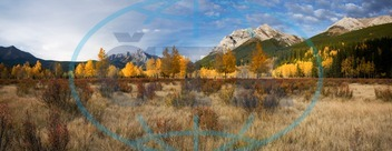 fall colours, aspens, colour, color, fall, seasons, kananaskis, alberta, western canada, autumn, aspen, beauty in nature, sunset, day, environment, panoramic, pano, horizontal, highresolution, majestic, alone, wild, free, f