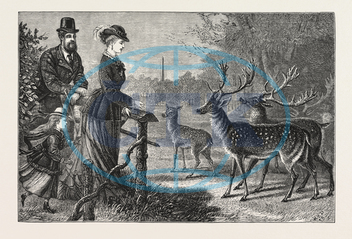 FEEDING, DEER, PHOENIX PARK, DUBLIN, IRELAND, ENGRAVING, 1876, europe, european, engraved image, history, historic art, illustrative technique, engravement, Arts, Culture, 19th Century Style, Retro Styled, Vintage, retr