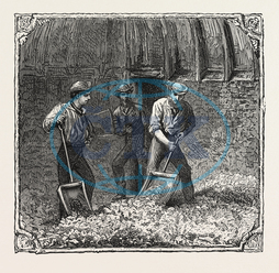 HOPS, HOP, PICKERS, KENTISH, HOP GARDEN, KENT, ENGLAND, TURNING, HOPS, KILN, ENGRAVING, 1876, UK, britain, british, europe, united kingdom, great britain, european, engraved image, history, historic art, illustrative techn
