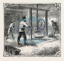 HOPS, HOP, PICKERS, KENTISH, HOP GARDEN, KENT, ENGLAND, FILLING, POCKETS, PRESS-HOUSE, ENGRAVING, 1876, UK, britain, british, europe, united kingdom, great britain, european, engraved image, history, historic art, illustra