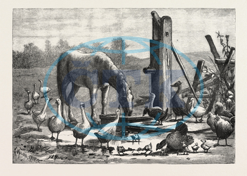 FASHIONABLE, WATERING, PLACE, HORSE, GEESE, CHICKEN, OUTDOOR, FARM, ENGRAVING, 1876, engraved image, history, historic art, illustrative technique, engravement, Arts, Culture, 19th Century Style, Retro Styled, Vintage, r