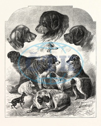 BRIGHTON, DOG SHOW, ENGRAVING, 1876, UK, britain, british, europe, united kingdom, great britain, european, engraved image, history, historic art, illustrative technique, engravement, Arts, Culture, 19th Century Style,