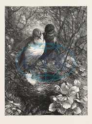 FIRST, NEST, ENGRAVING, 1876, BIRD, BIRDS, SPRING, NATURE, engraved image, history, historic art, illustrative technique, engravement, Arts, Culture, 19th Century Style, Retro Styled, Vintage, retro, arkheia, nineteenth