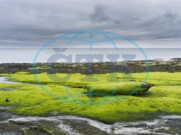algae, atlantic, bleak, central europe, coast, coastal landscape, dramatic, europe, great britain, green, horizontal, island, kelp, landscape, low tide, marine, maritime, nobody, north sea, northern europe, northern Isle