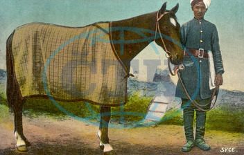 INDIAN SYCE GROOM C1905